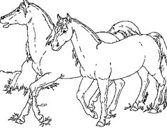 Coloriage Animaux Chevaux
