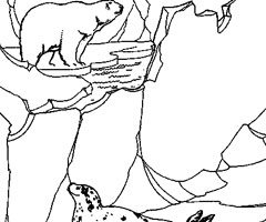 Coloriage Animaux Pole Nord