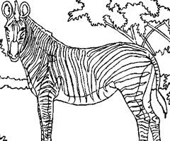 Coloriage Animaux Savane