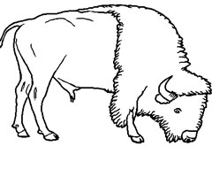 Coloriage Bison