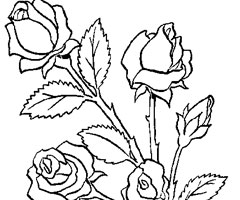 Coloriage Bouquet de Rose