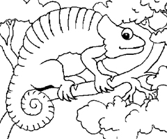 Coloriage Cameleon