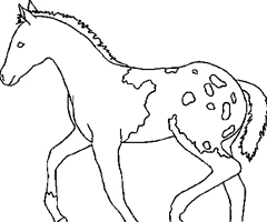 Coloriage Cheval poulain
