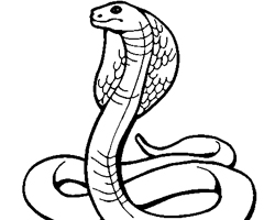 Coloriage Cobra Royal