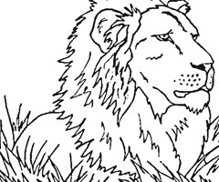 Coloriage Félin