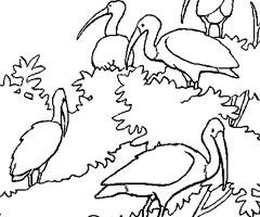 Coloriage Ibis