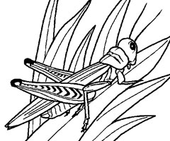 Coloriage Insecte