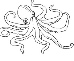 Coloriage Octopus