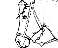 Coloriage T�te De Cheval