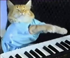 photo Charlie Schmidt's Keyboard Cat