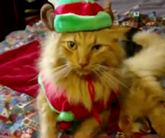 photo Chiens et Chats qui chantent Jingle Bells