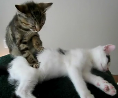 photo Massage entre Chats