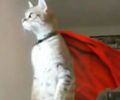 photo Parodie chat qui se tient debout Superman