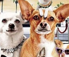 Le Chihuahua de Beverly Hills 2 Blu Ray